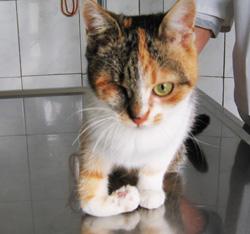 Trauma - prijelom kosti u mačke
